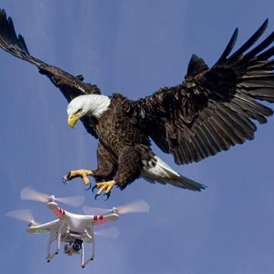 Técnico Avanzado en Uso Ilegal de Drones Comerciales
